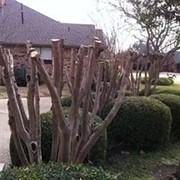 Кронирование(обрезка) и омоложение деревьев в херсоне фото