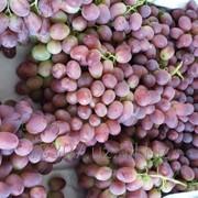 Виноград высший сорт фото