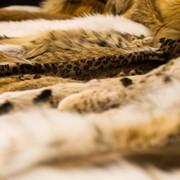 Ремонт изделий из меха (шубы, куртки, жилеты) фото