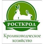 Закупка кроликов живым весом фото