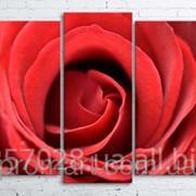 Модульна картина на полотні Велика троянда код КМ100200(176)-013 фото