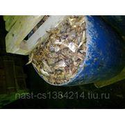 Утилизация рыбных отходов фото