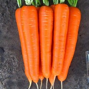 Семена моркови Лагуна F1 25000 шт. фото