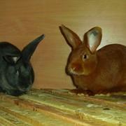 Услуги по Разведение кроликов фото
