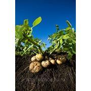 Земля под картофель фото