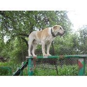 Профессиональная дрессировка собак все пород фото