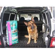 Зоотакси, перевозка животных фото