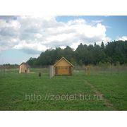Гостиница для больших и средних собак «ЗооЭкоОтель» фото