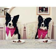 Передержка собак и кошек - Зоопансион фото