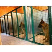 Гостиница для животных фото