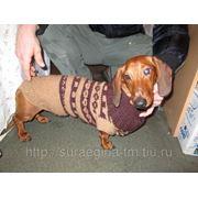 Вязание для собак фото