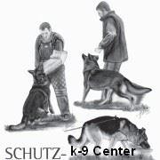 Дрессировка собак в Саратове фото