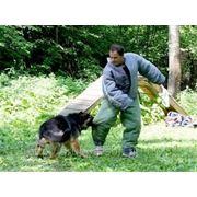 Подготовка служебных собак фото