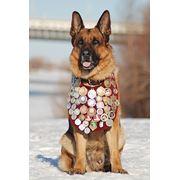 Дрессировка собак в омске фото