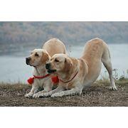 Дрессировка собак. Зимой — помещение. фото