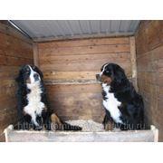 Гостинница(передержка) собаки во время вашего отъезда фото