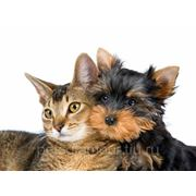 Стрижка Собак и Кошек фото