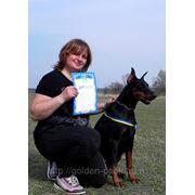 Дрессировка, инструктор по вязке собак, пансион фото