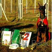 Дрессировка, пансион, дрессировочная площадка для собак фото