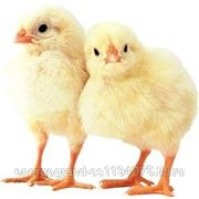 Комбикорм для молодняка кур 1-7 недель в Волжском фото