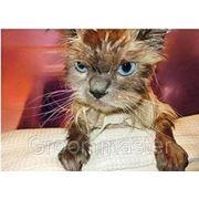 Стрижка кошек. фото