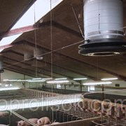 Оборудование для свиноводства фото