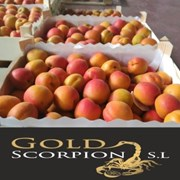 Продаем абрикос из Испании фото