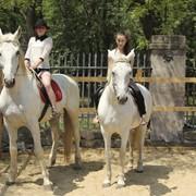Фотосессии с лошадьми фото