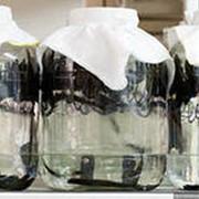 Пиявки медицинские лечебные в упаковке фото