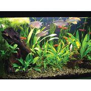 Набор для подсветки аквариума 1*0,5м. негерметичный. фото