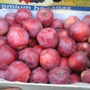 Яблоки сорта Флорина фото