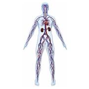 Аппарат интервальной вакуумной терапии VACUSPORT® фото