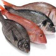 Рыба свежая фото