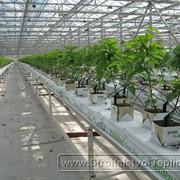 Система выращивания на подвесных лотках с рециркуляцией и дезинфекцией фото
