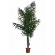 Искусственное дерево Арека Наири лонг (Код товара: 65380) фото