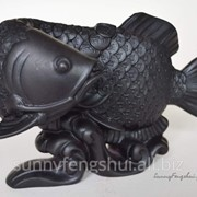 Талисман Арована - императорская денежная рыба фото