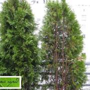 Оказание помощи больным растениям фото