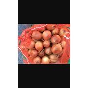Реализуем лук, картофель, морковь и капусту по оптовым ценам!!! фото