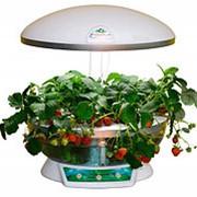 """Гидропонная система """"Домашний сад"""", белая прозрачная, N2810 фото"""