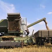 Уборка зерновых комбайнами фото