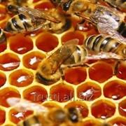 Мед подсолнечника фото