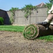 Подготовка участка и укладка рулонного газона фото