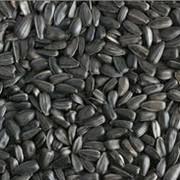 Закупаем зерновые и масличные кулбтуры по Днепропетровской области фото