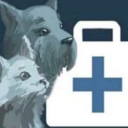 Санаторно-профилакторное лечение собак и кошек. Ветеринарная клиника г. Симферополь фото