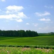 Участок под Киевом,продажа земли,Бориспольский район продажа участков,недорго продам фото