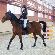 Навыки верховой езды. Катание на лошадях, Иппотерапия. Общение с животными. Занятие конным спортом. Конный рейд. Прогулка конная. Конные соревнования. Конный спорт. Игры верхом. фото