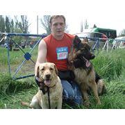 Выставки собак услуги хендлера фото