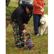 Дрессировка собак индивидуально с выездом. фото