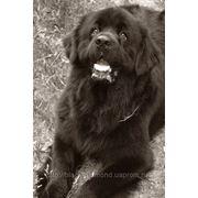 Чипирование собак фото