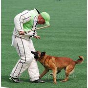 Дрессировка собак в Саратове. Для нас нет не обучаемых собак! Мы — лучшие! фото